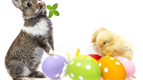 cute rabbits and chicks cute easter bunny hd wallpaper wallpaperfx