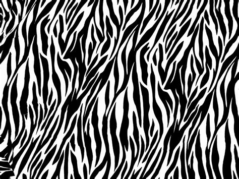 zebra print animals photos