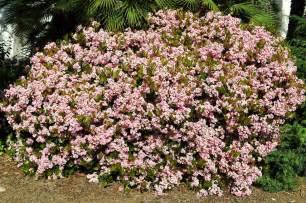 116 chameleon safe plants with pictures i thur z