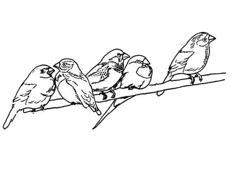 Coloriage Oiseaux Les Beaux Dessins De Nature 224 Imprimer