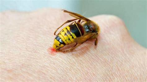 insektenstiche bett insektenstiche aussehen komplikationen vorbeugung
