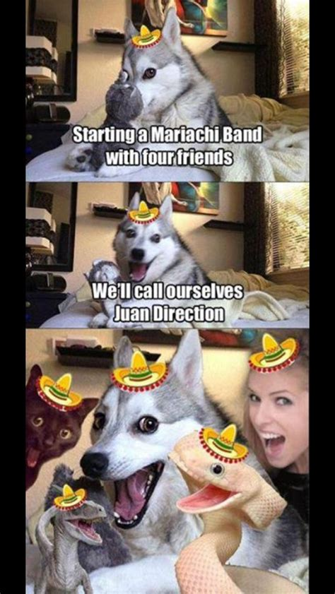 favourite internet meme  bad pun husky puns