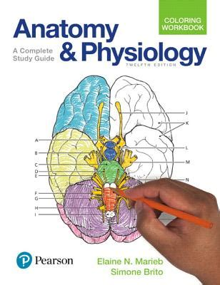 anatomy coloring book study guide anatomy physiology coloring workbook a complete study