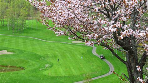 cherry blossom photos a guide to japan s cherry blossom season cnn com