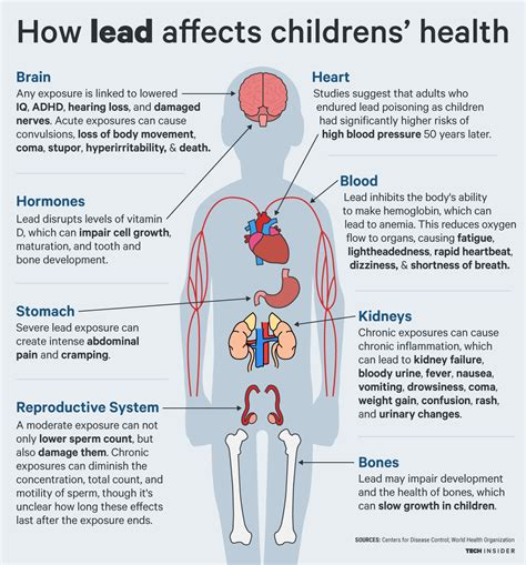 lead poisoning lead s effects of a child s body business insider