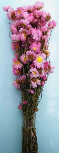 Bloom Box Pink Multicolor Preserved Flower dried flower bunches dried flowers shop