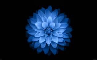 Lotus Blue Apple Iphone 6 Blue Lotus Flower Hd Desktop Wallpaper