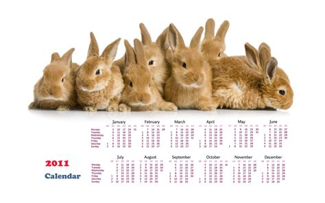 2011 rabbit calendar wallpaper wallpapers hd wallpapers