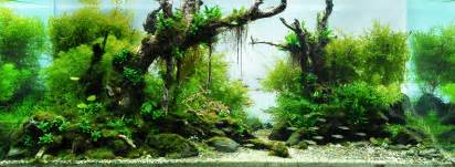 the international aquatic plants layout contest 2009