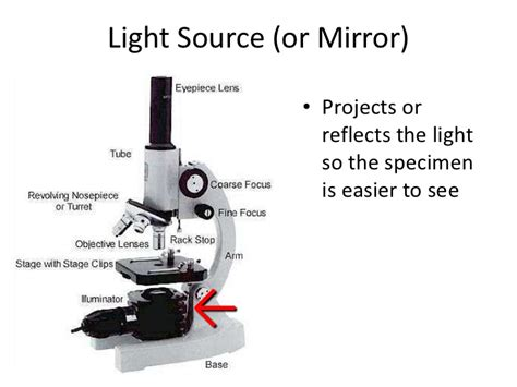 Microscope Light Source Function Decoratingspecial Com