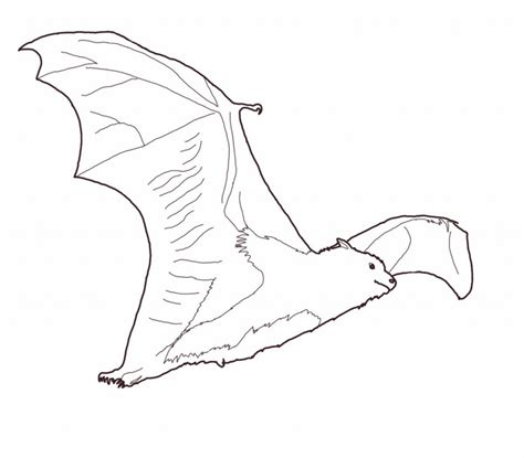 coloring pages printable bat free printable bat coloring pages for kids