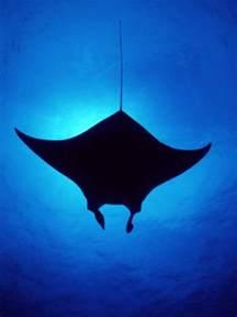 manta ray concept giant bomb