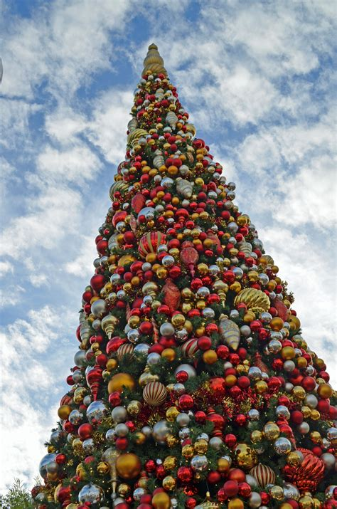 christmas holiday trees of disneyland resort dbm your