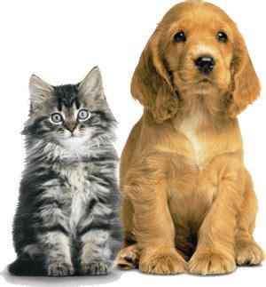 Pet Shoo Puppy Kitten 250ml Shoo Anjing Dan Kucing ohlone humane society advocating for all animals since 1983