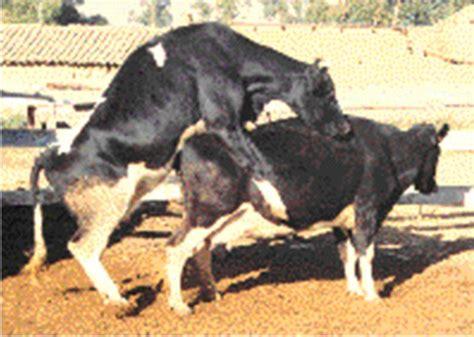 imagenes vacas locas rincondelingenieroagroindustrial