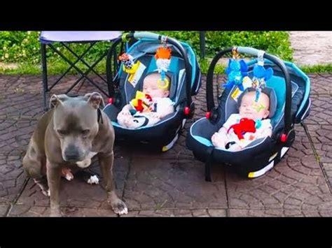 dogs protecting babies dogs protecting babies compilation bravecto flea