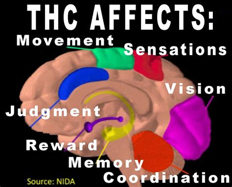 Does Tabacco Affect Thc Detox by Marijuana Effects On Newhairstylesformen2014