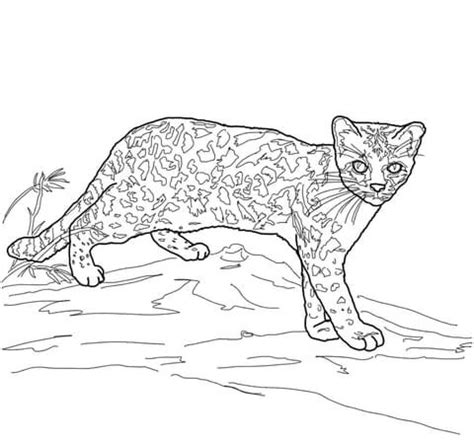 coloring pages of wild cats margay wild cat coloring page free printable coloring pages