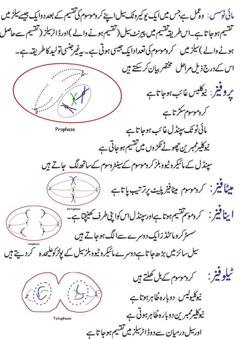 Explanation Letter In Urdu essay questions mitosis meiosis