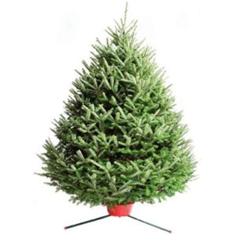 7 8 ft fresh nobel fir 7 ft 8 ft fresh cut fraser fir tree in store only 10044 the home depot