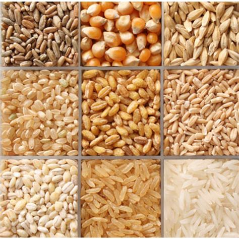 bulk food organic bulk food briden solutions emergency and disaster supplies