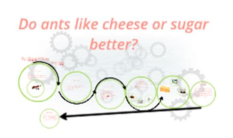 do ants like cheese or sugar better by piotr klaus on prezi