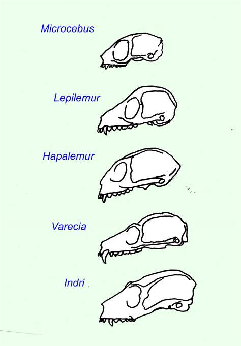 Lem 3m 77 By Serafindo index of updated2 thinking evolution prehistoric kinds