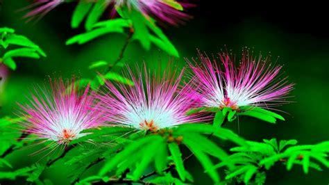 imagenes de rosas full hd flores petalos colores fuertes fondos de pantalla hd