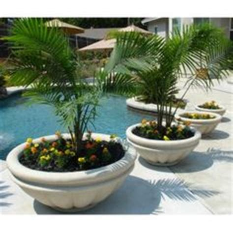 1000 images about pool ideas for planters etc on
