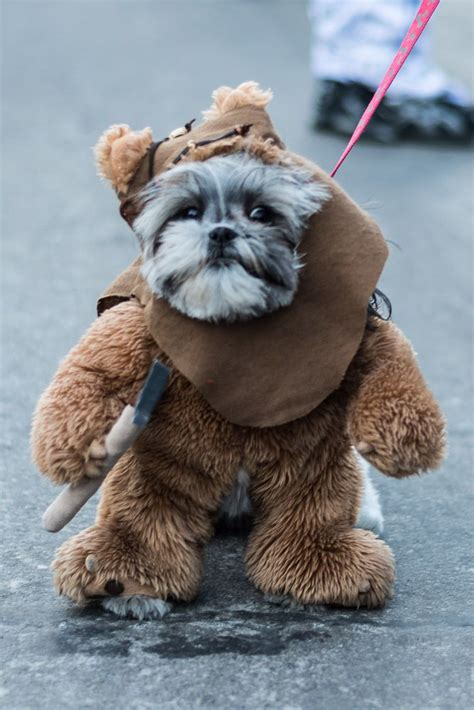 ewok puppy 1000 ideas about ewok costume on costumes pet costumes and