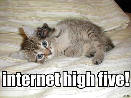 Cat Internet Meme - internet high five high five me pinterest cats
