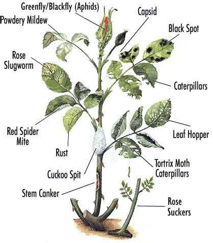 garden pests and diseases how to plant diseases and pests