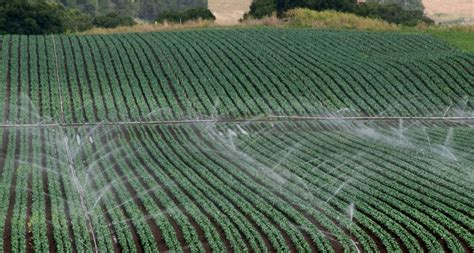 Agricultural Finance From Crops To Land Water And Ebook E Book crops take up drugs from recycled water science news