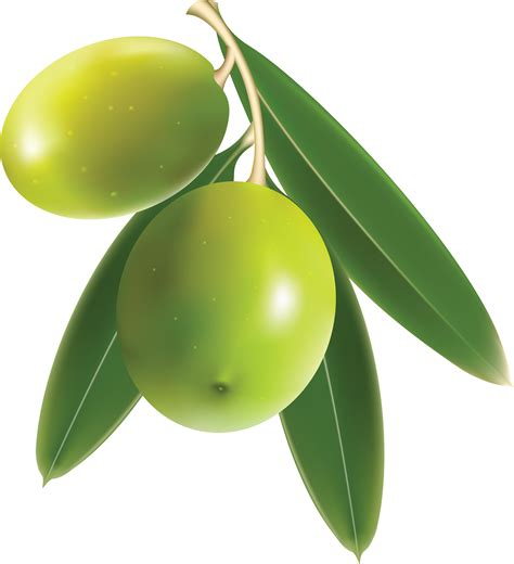 Can You Use Olive In An L by Olive Png