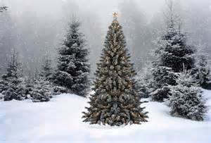 wallpaper christmas new year christmas tree snow