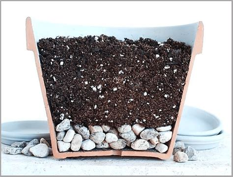 container gardening   improve drainage  potted