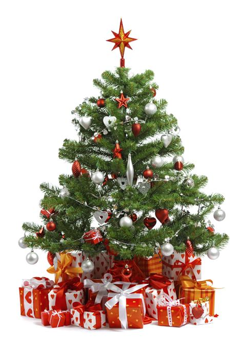 when should i buy a christmas tree our guide to buying a