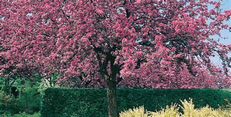 alberi da giardino fioriti alberi da giardino vuoi avere un giardino sempre fiorito