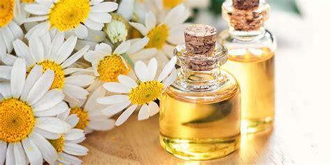 essential oils for allergies 6 best essential oils to combat allergens allergy air