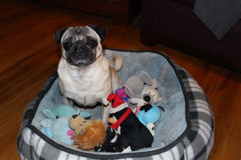pug toys for guard pugs about pug