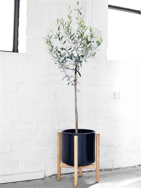 in door plant put in pot vide the prettiest pots to put plants flowers in realestate