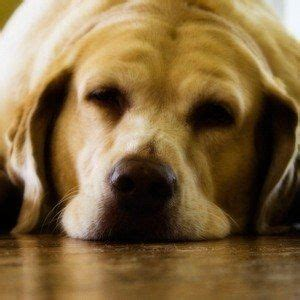 sleeping pills for dogs can i give my a sleeping pill sleep meds safe for dogs