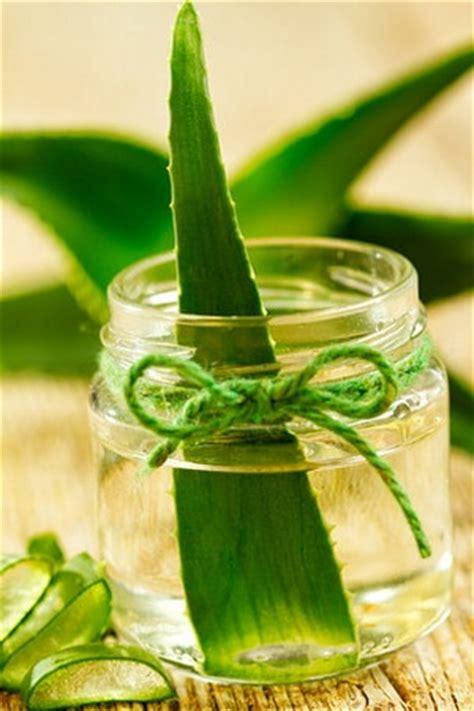 aceite esencial de aloe vera todas sus increibles propiedades