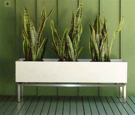 Indoor Grass Planters by Metaphys Indoor Grass Planters Freshome