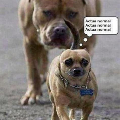 imagenes comicas de animales con frases im 225 genes de risa con animales chistes de mascotas para