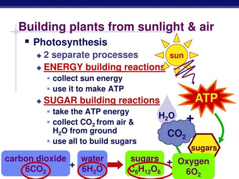 sunlight l for plants ppt photosynthesis life from light and air powerpoint