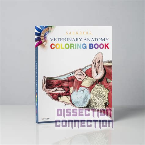 saunders veterinary anatomy coloring book free pdf 92 veterinary anatomy coloring book pdf veterinary