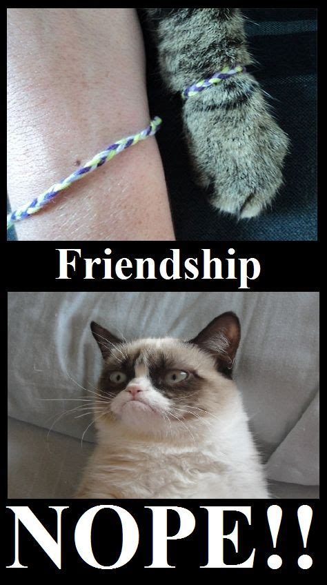Friendship Memes - grumpy cat friendship meme cute animals pinterest