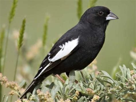 colorado state bird spurs ornithological controversy