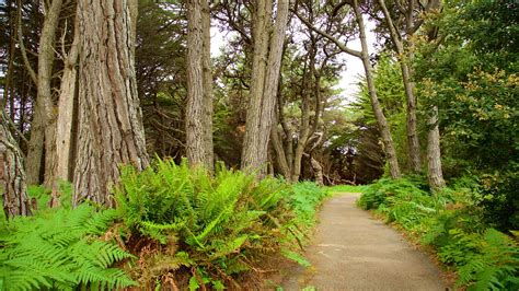 Botanical Garden Fort Bragg Mendocino Coast Botanical Gardens In Fort Bragg